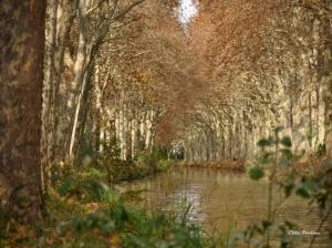 Le Canal du Midi et sa parure d'Ambre