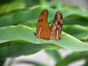Un amour de papillon